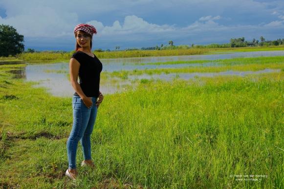 rice field wide