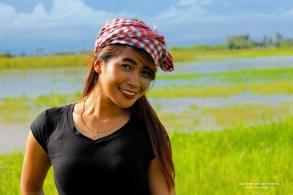rice fields nice